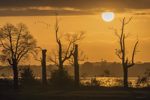 Brian_Sunset Silhouette 2 LG_111114_2D