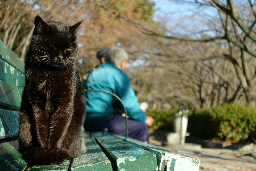 A cat in Mejo park 2015.01 No.2.