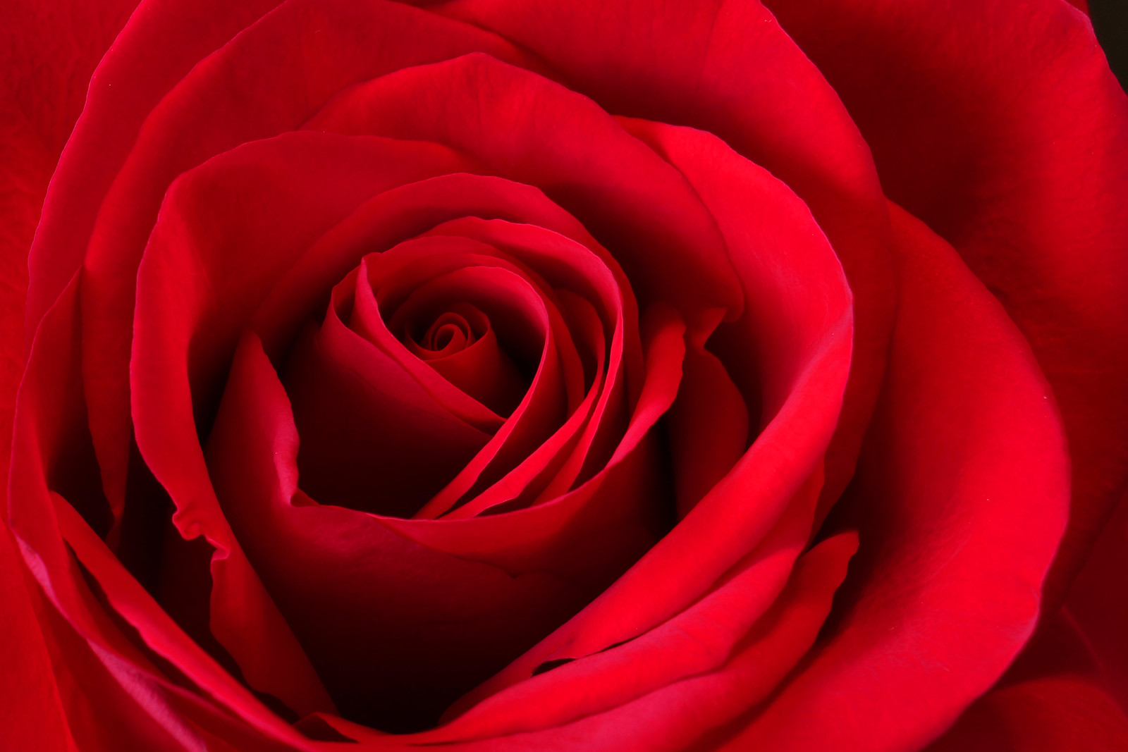 Valentine's Red