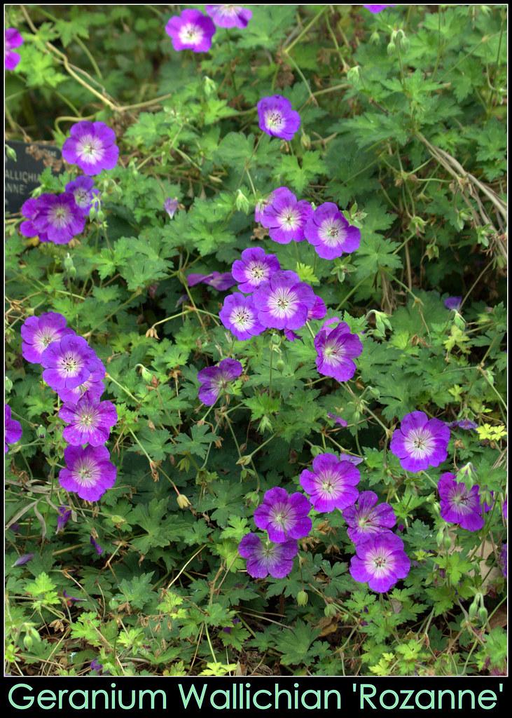 Cromos de plantas y flores