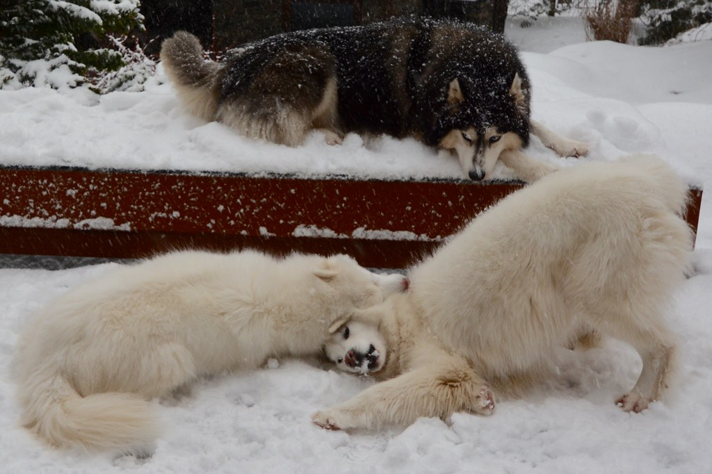 Chase & Jag snuggling in the snow!