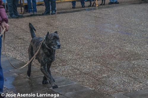Feria de San Jose en Güeñes Bizkaia 2015 #DePaseoConLarri #Flickr  -039