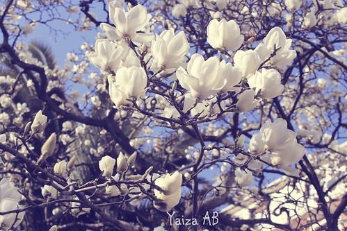 ya llega la primavera en Bilbao