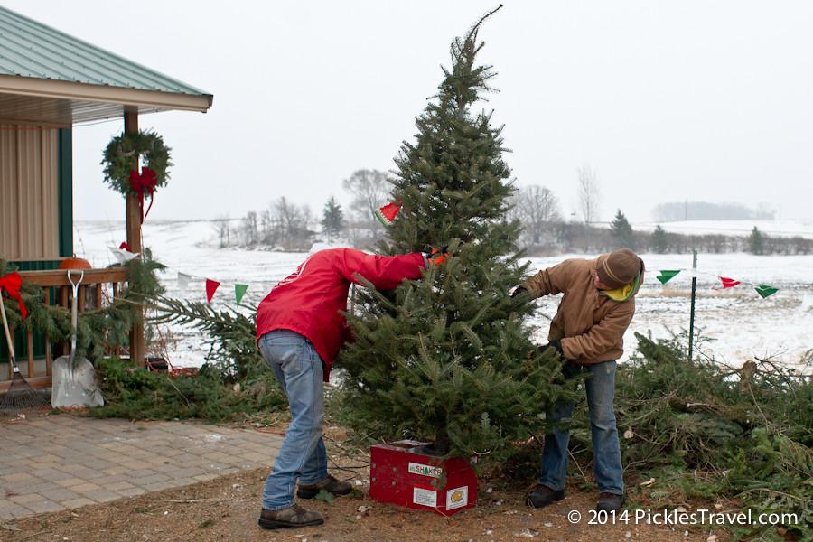 Shake-Christmas Tree Shopping