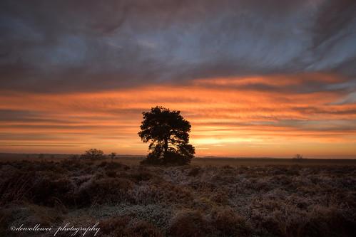 trees sky tree sunrise zonsopkomst engbertsdijksvenen engbertsdijksevenen engbertsdijkse twenterand engbertdijkveen