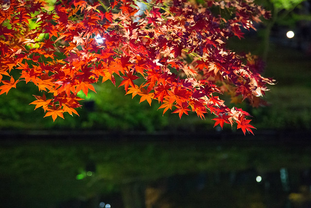 kyoto Red leaves 高台寺の炎