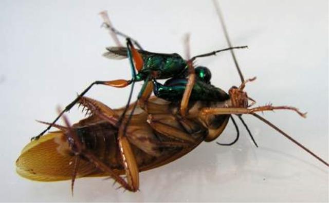 Zombie Roaches
