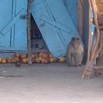 India- Karuna farm