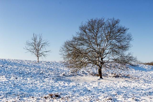 Schnee im Bergerbos - NL