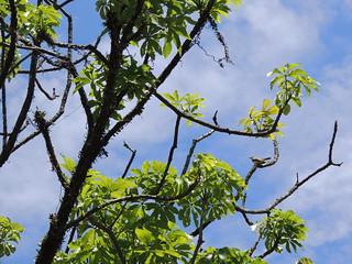 Brazilian trees under the blue sky.