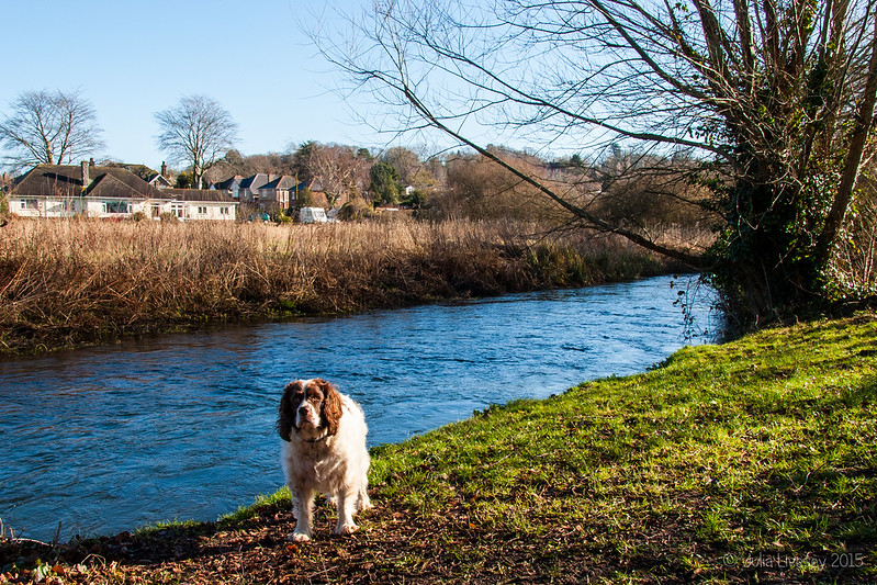 Max by the River Allen