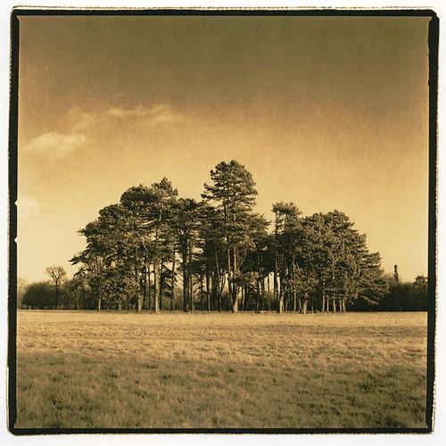 park trees dublin pheonix moersch