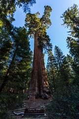 Kings Canyon & Sequoia - 41