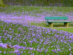 Platz nehmen- take a seat