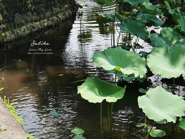 台北一日遊景點推薦植物園荷花蓮花池 (33)