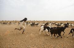 A sense of Mauritania