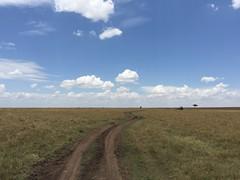 Camino en el Masai Mara