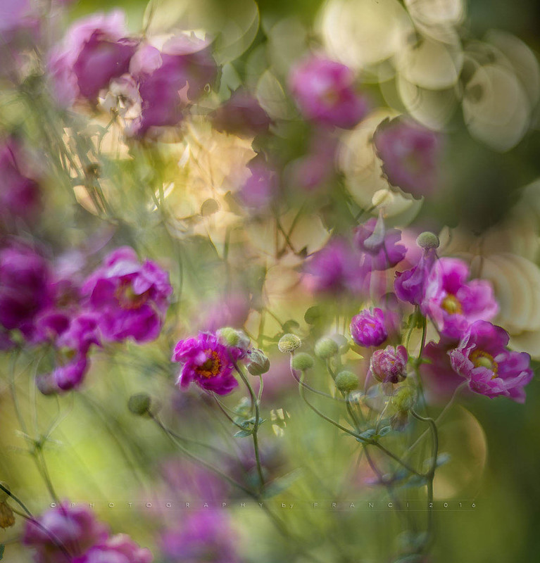 Fluttering flowers