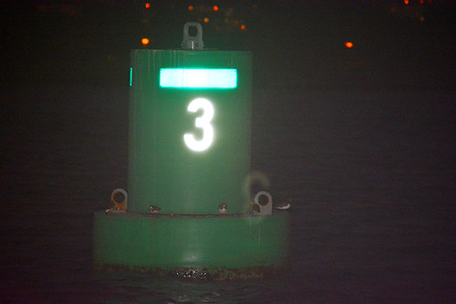 ruddy turnstones on buoy