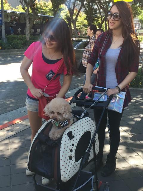 dog of taiwan