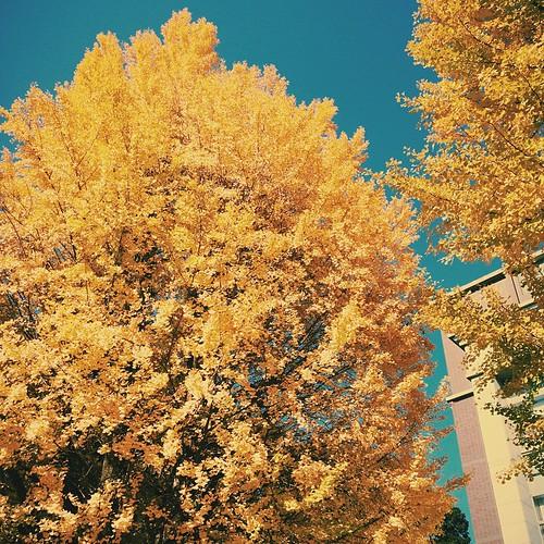 黄色黄色黄色