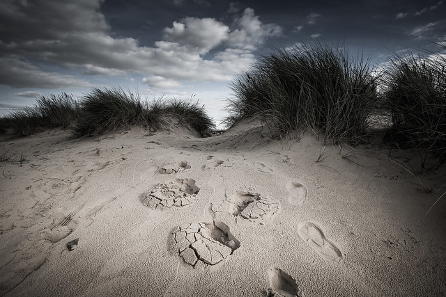 Scott Baldock - Dune