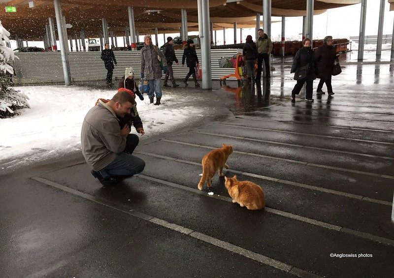 Two Migros cats