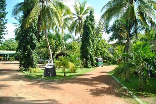 164 Bangadenya (4)