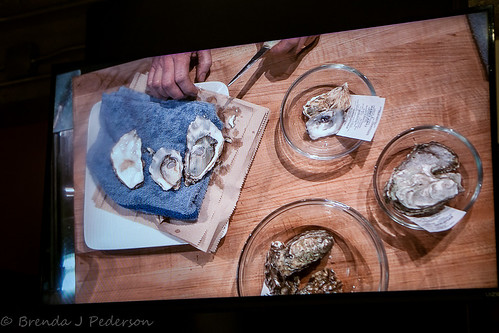 Talking Oysters