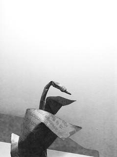 Swan by Hoàng Tiến Quyết