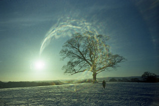 sycamore in the snow with lens flare