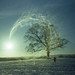sycamore in the snow with lens flare by pho-Tony