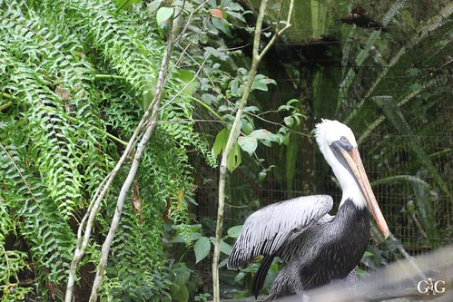 Zoo Karibikinsel Belize 19.11.2014 30
