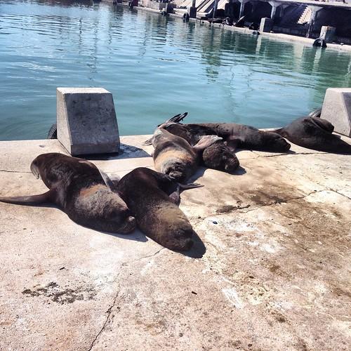 #Descanso -  #Lobo #Marino #MarDelPlata #Puerto #Port
