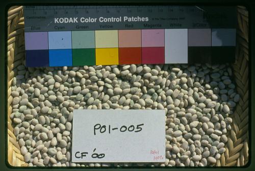 P01-005 CF00 S1