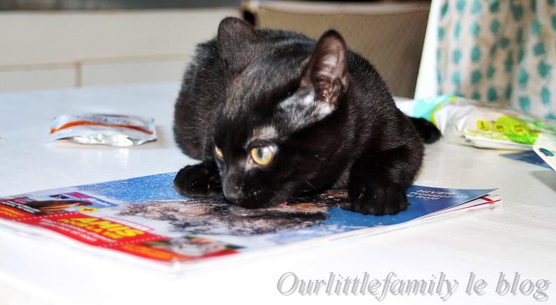 kittyboxfevriertestavis7