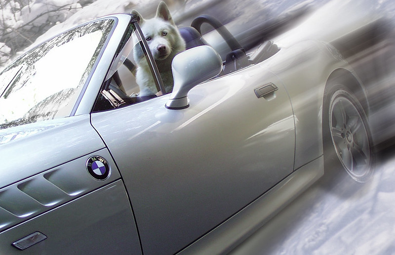 Czar Driving BMW
