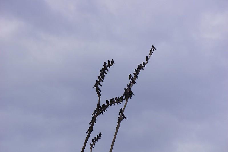 manaus-rio negro-amazon 85