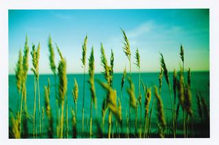 "sea of ""fluffy top grasses"""