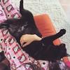 Morning snuggles with Bilbo  #bilbothecat #blackcat #catsofinstagram #furbabies #hellokitty #onesie #tw