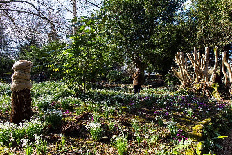 Snowdrops in the Victorian Fernery