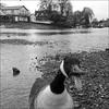 Rhianna - Twickenham Embankment 130214 CMC (3)