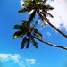 Palms in the sky a permanent fixture of a tropical island getaway by oceanebelle