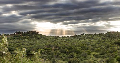 southafrica krugernationalpark mpumalanga krugerpark kruger nwanetsi nwanetsipicnicsite