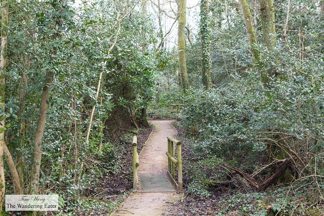 Woodland trek around the vineyard