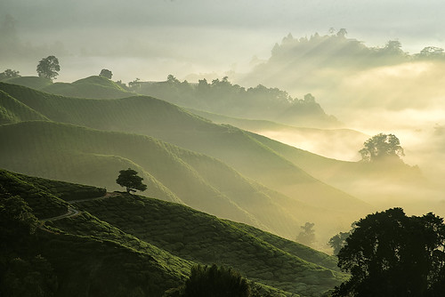 nature sunrise landscape photography nikon telephoto malaysia d750 tele glowing effect rol rayoflight 2015 cameroonhighlands