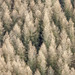 Larix Decidua by Aerial Photography