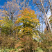 Small photo of Fall Color at Winterthur Estate
