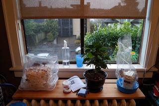 Mushroom kits growing