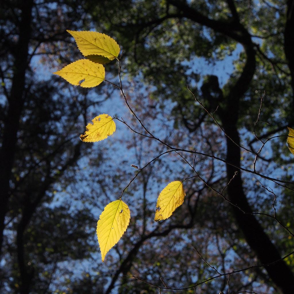 明治神宫的森林 forest of Meiji Jingu